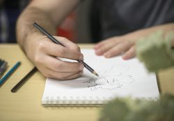 A student draws a plant during an art class.