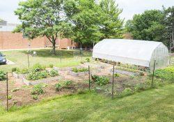KCC's community garden.