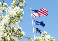 An American flag viewed through a flowering tree.
