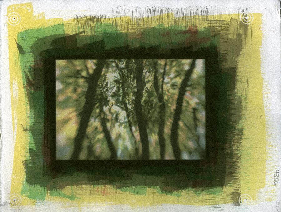 "Ginger Owen-Murakami's gum bichromate print ""Specimen #4356."""